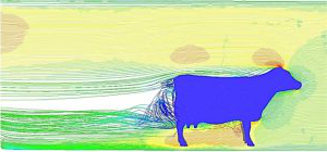Image 的 a cow computed in fluid dynamics